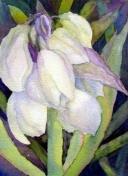 Yucca bloom in watercolor by Rachel Murphree
